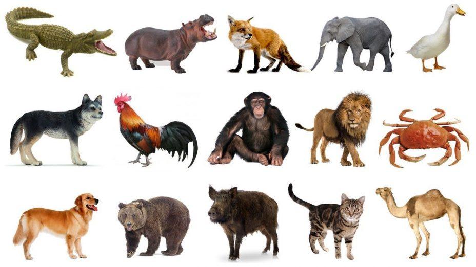 Mơ thấy động vật đánh con gì chắc chắn ăn tiền?
