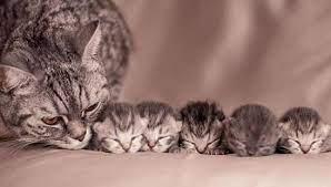 Mơ thấy mèo đẻ
