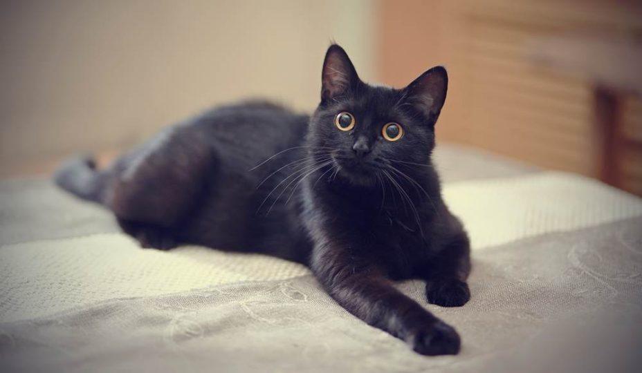 mơ thấy bị mèo đen đuổi theo